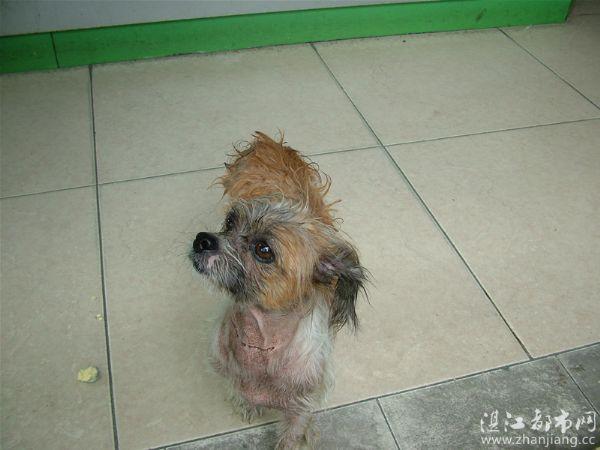 给流浪狗一个遮风挡雨的家……_小白的空间_湛江都市网