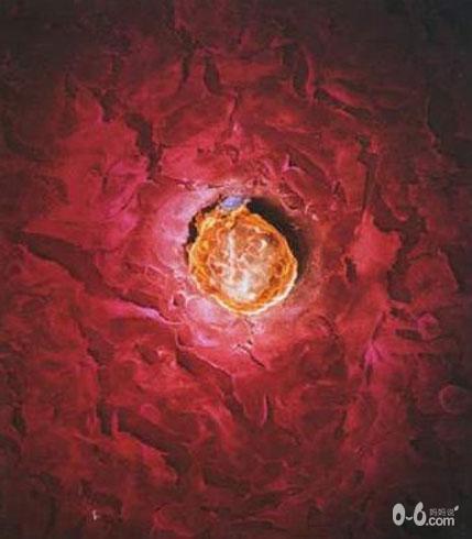 图解人体受精及胚胎发育过程_胎儿发育_怀孕