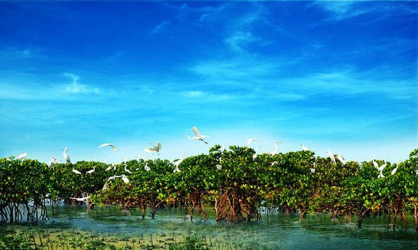 中国最美的八大海岸,你去过几个?_旅游_博览社_湛江