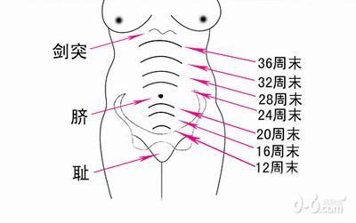 孕妈自检宝宝制造方法之之测宫高_怀孕期_博模具设计与发育下图片