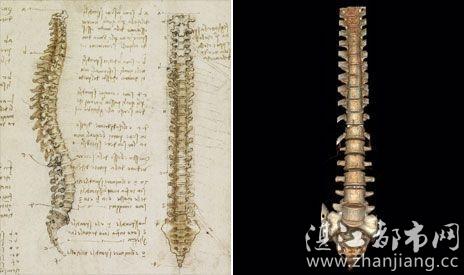 芬奇绘制的脊骨素描图与数字成像技术获取的脊骨图像对比-英国展出