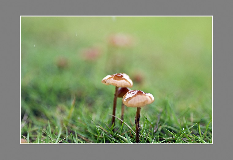 雨中小蘑菇
